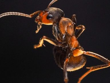 PHOTO: Are these ants dancing?