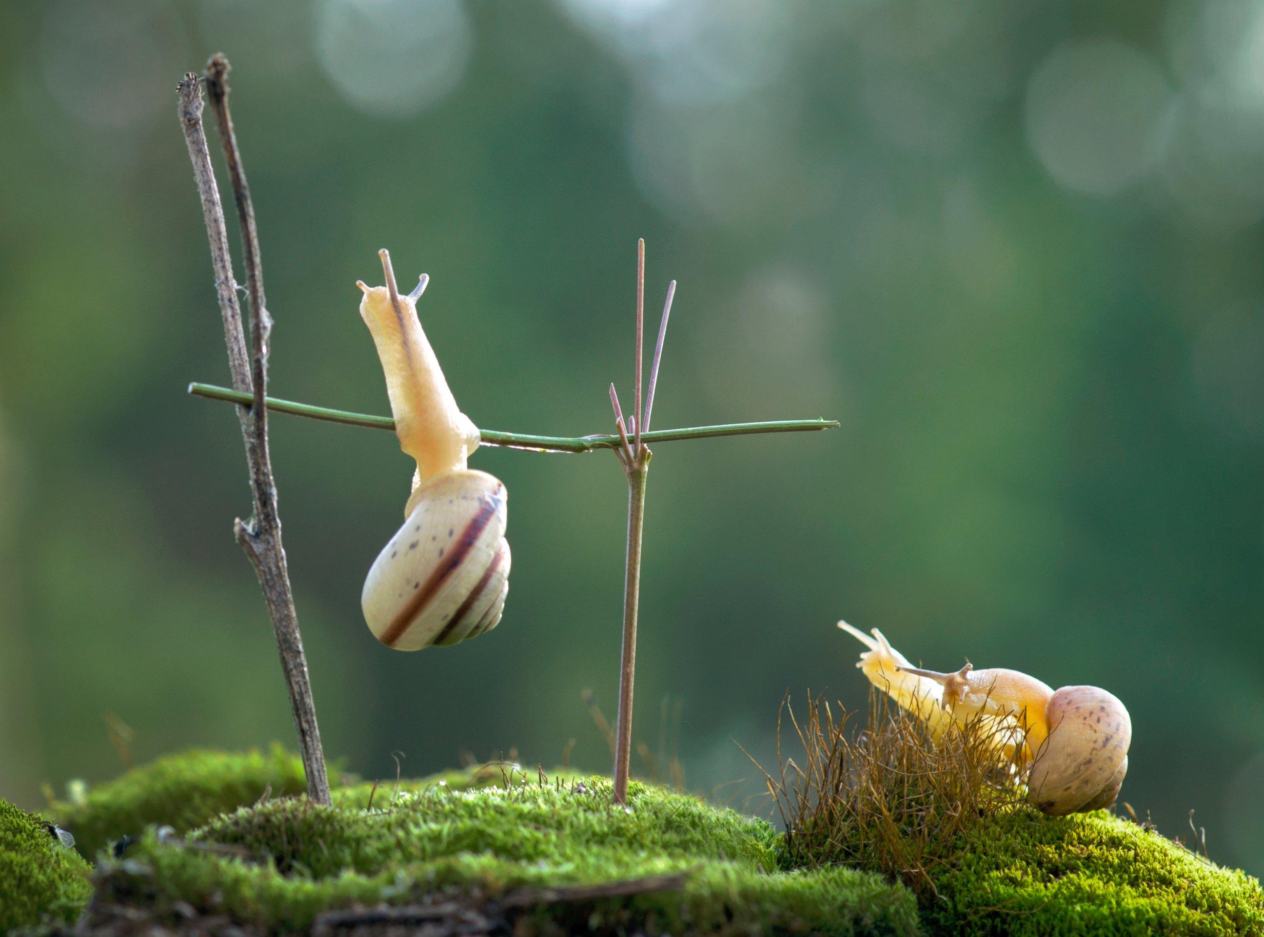 No Pain, No Gain! Snail Does A Chin-Up