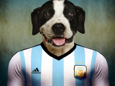 Photos: Canine Colors: Dogs in World Cup Jerseys