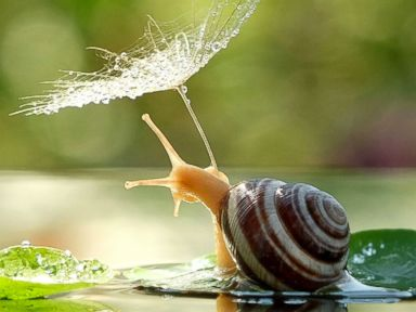 Photos: Who Knew Snails Could Be So Cute?