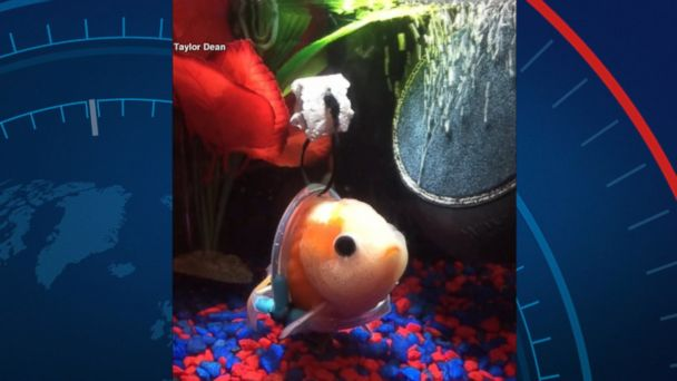 An aquarium store manager in San Antonio, Texas, created a