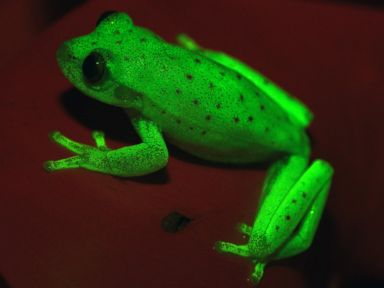 Check out this glow-in-the-dark frog