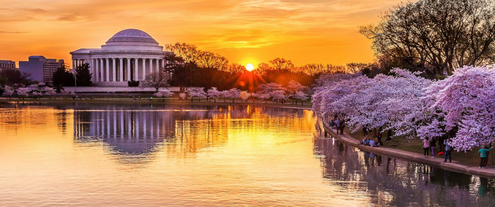 PHOTO: Cherry blossoms are pictured during peak bloom at the Tidal Basin in Washington D.C. in this stock photo.