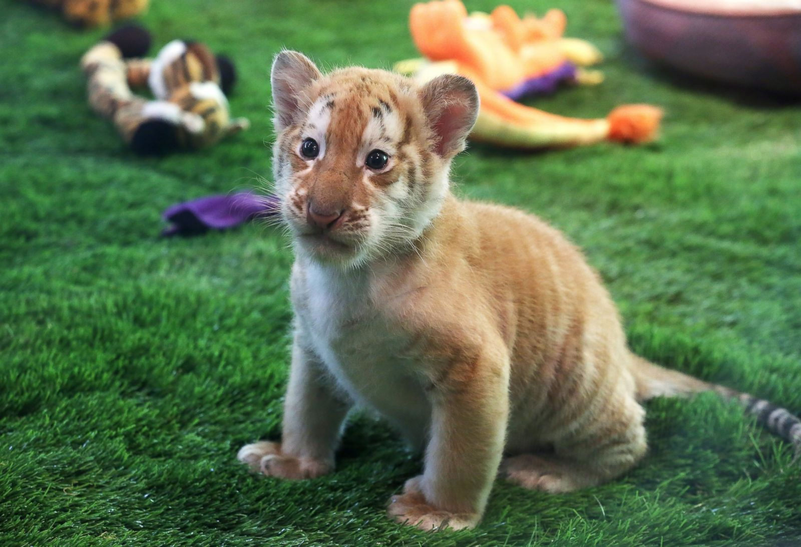 Cutest baby animals from around the world Photos | Image ...