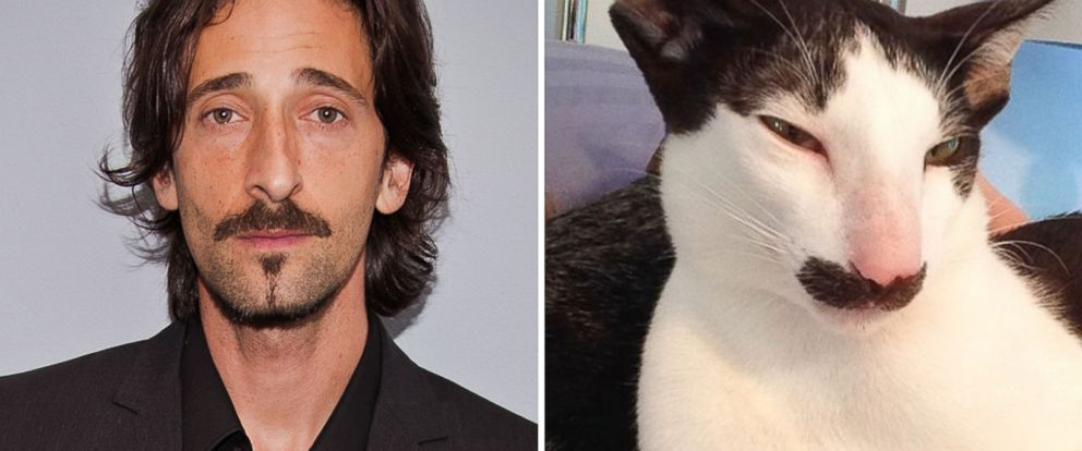 PHOTO: Stache the cat is thought to resemble Adrien Brody.