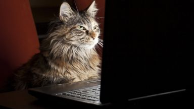 PHOTO: The Friskies internet cat-video awards airs on Oct. 15, 2013.