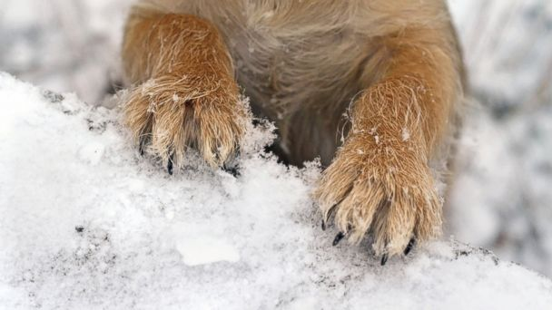 GTY dog paw snow jef 140130 16x9 608 A Dogs Best Pawtection From Cold Weather and Salt