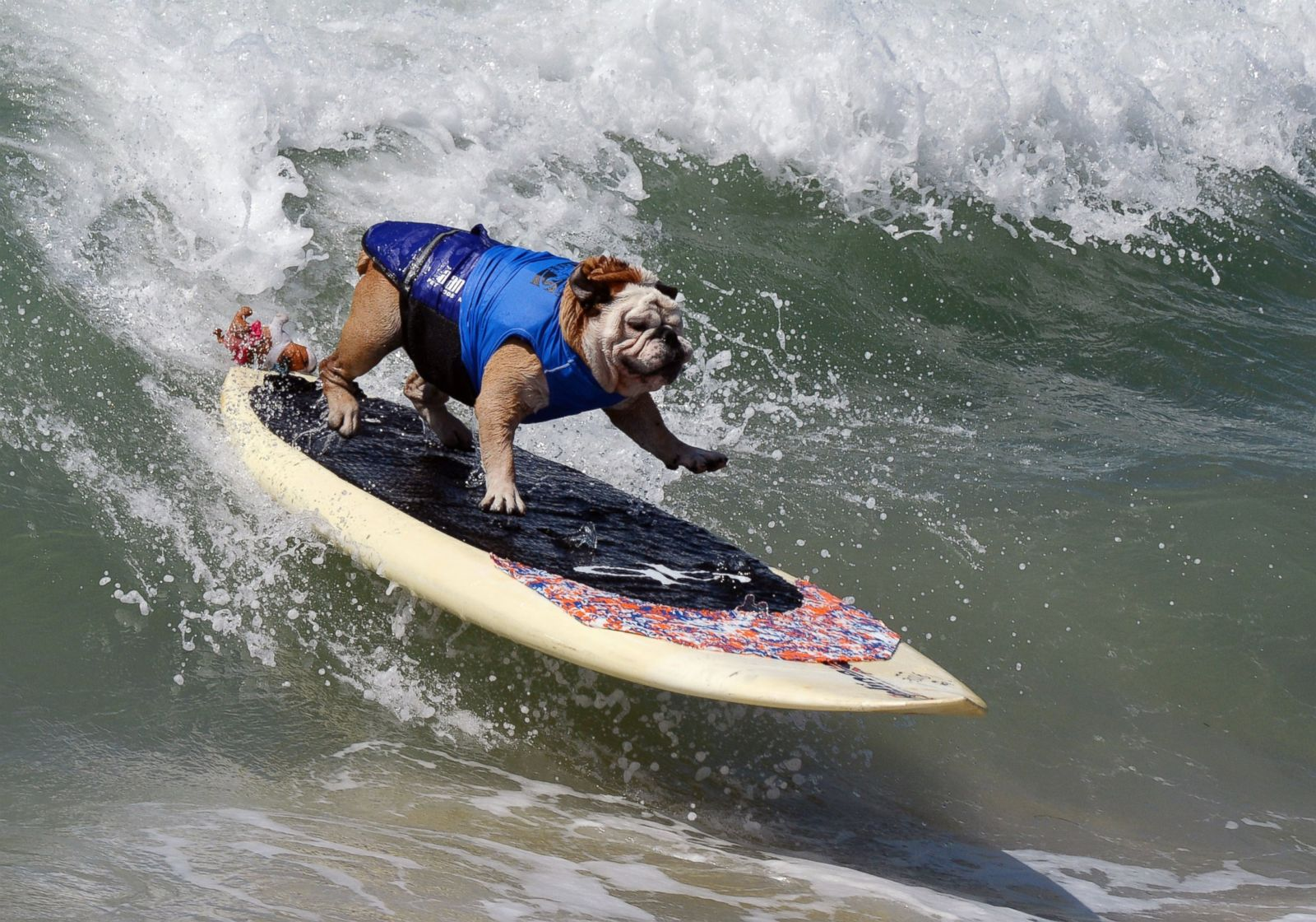 Gty dog surfing 8 sk 140929 10x7 1600