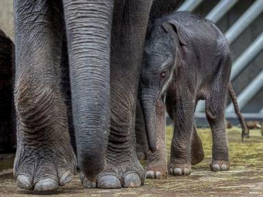 PHOTO: Baby Elephant Debuts At Prague Zoo