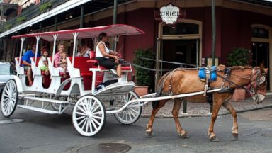 PHOTO: Mule-drawn carriages make their way through the French Quarter, July 24, 2010, in New Orleans.