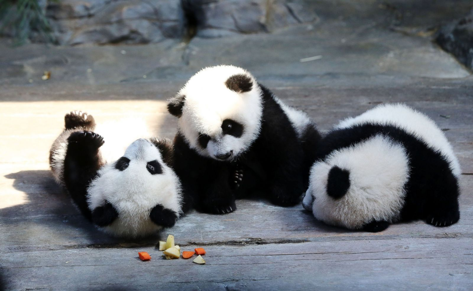 Cute, Cuter and Cutest Triplet Pandas at Play Picture ...