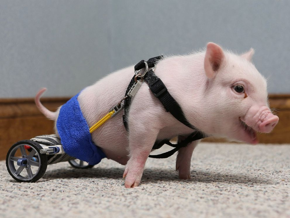Adorable animals overcome disability