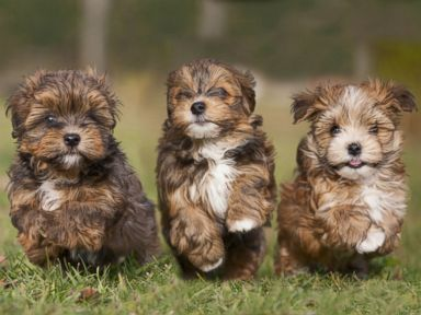 Photos: Paws-itively Adorable Puppies!