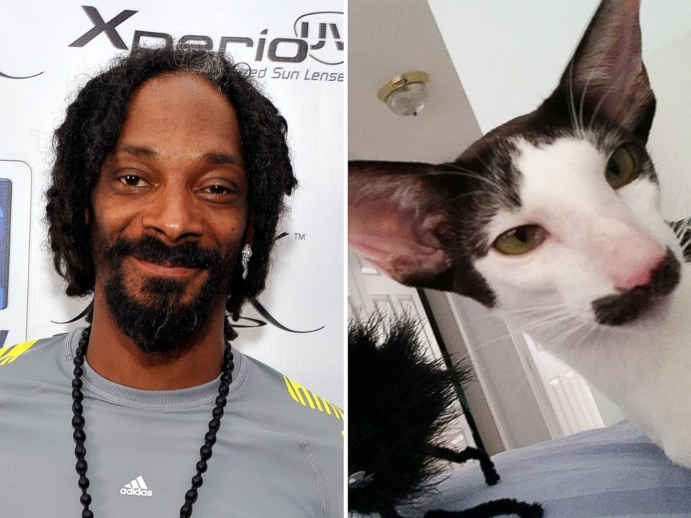 PHOTO: Stache the cat is thought to resemble Snoop Lion.