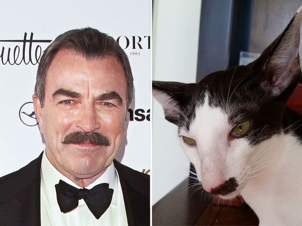 PHOTO: Stache the cat is thought to resemble Tom Selleck.