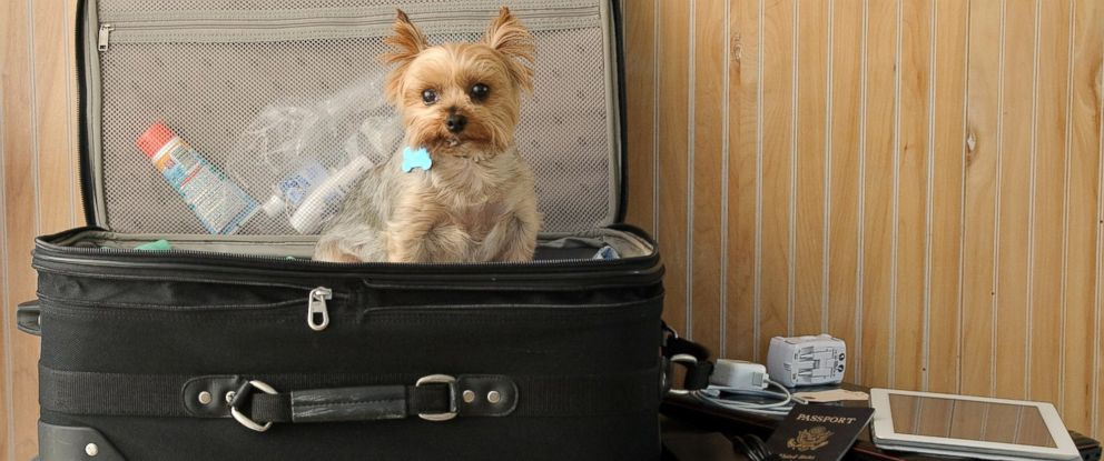 PHOTO: Pet experts recommend packing a t-shirt that smells like you to keep Fido calm while hes away from home.