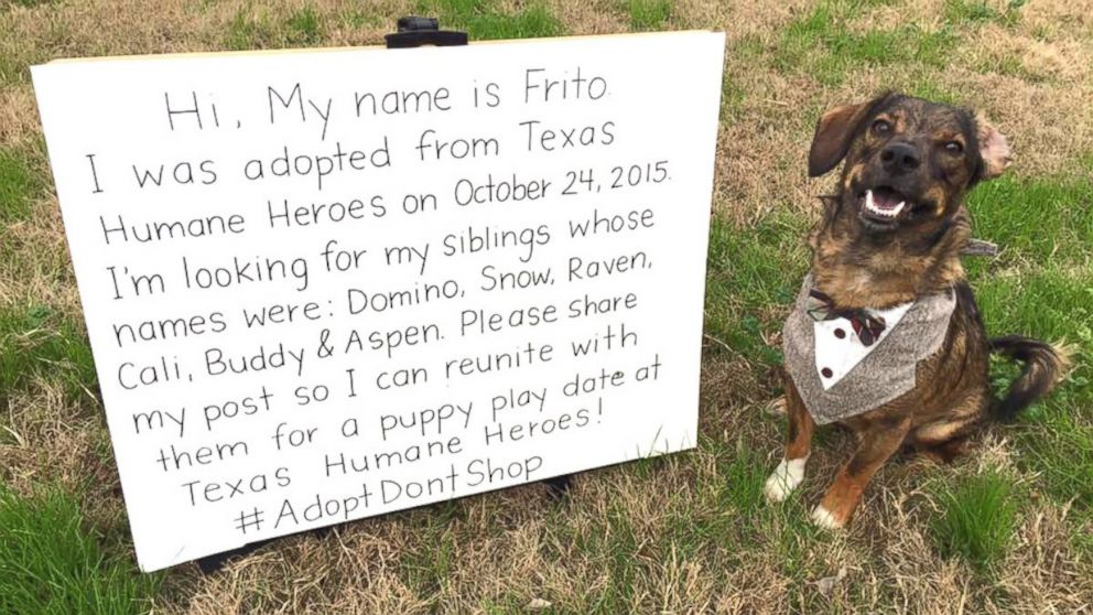 Rescue Dog Named Frito to Reunite With Long Lost Siblings for 'Puppy Playdate' - ABC News