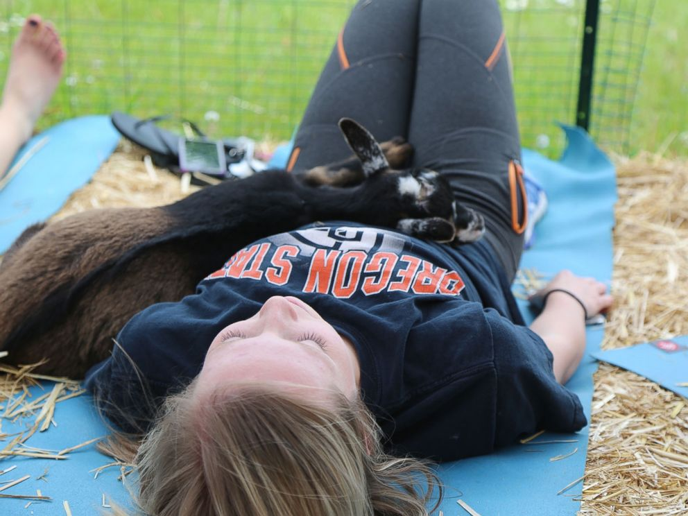 A goat snuggles with a woman taking a goat yoga class in Oregon.