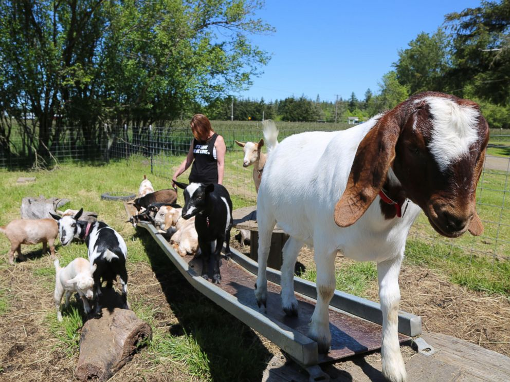 Lainey Morse on her farm in Oregon, where she came up with the idea for goat yoga.