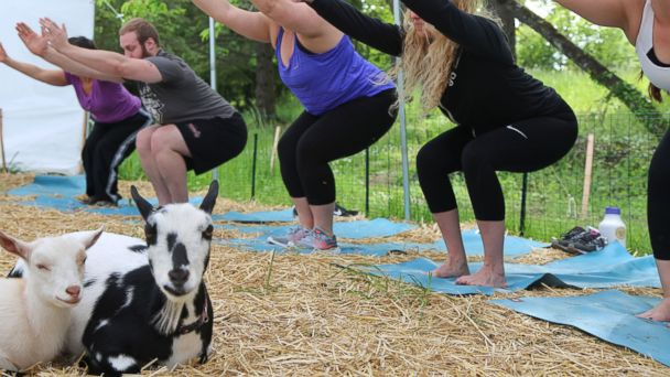 PHOTO: Yoga students hold a pose during a goat yoga class in Oregon.