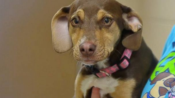 PHOTO: Peanut's owners said her barking and running is what led them to find a little girl lost outside.