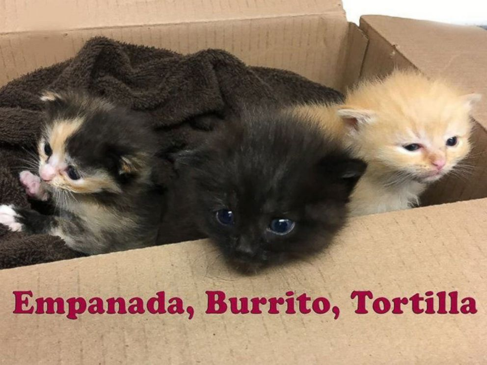 PHOTO: Burrito and his two siblings were dropped off by Good Samaritans at the Animal Welfare Association in the second week of April.