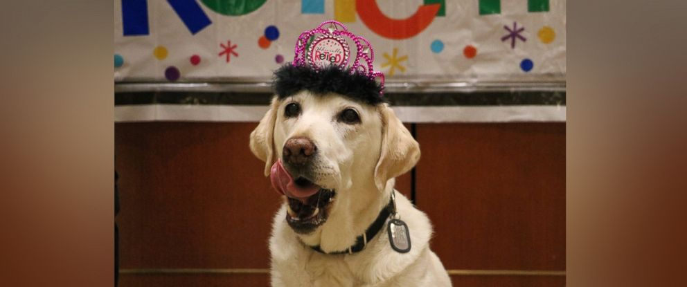 PHOTO: Gema, a service dog at Orlando International Airport, retired after five years on the job.
