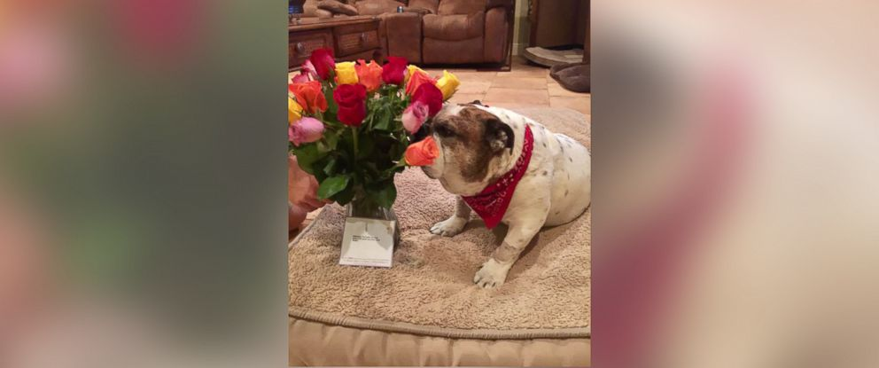PHOTO: Debbie Cardones husband sent flowers to their sick dog, but when she realized they werent for her, she wasnt impressed.