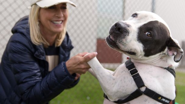 PHOTO: More than 2,500 shelter pets found homes in Michigan last week in a record setting event.