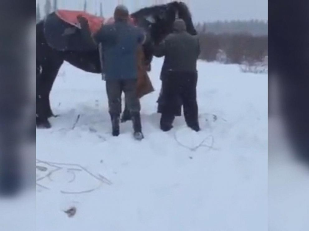 PHOTO: A group of farmers and firefighters helped rescue a horse that fell through an icy creek near the town of Rimbey in Alberta, Canada, on Jan. 9, 2017, according to Panoka County Fire Services.