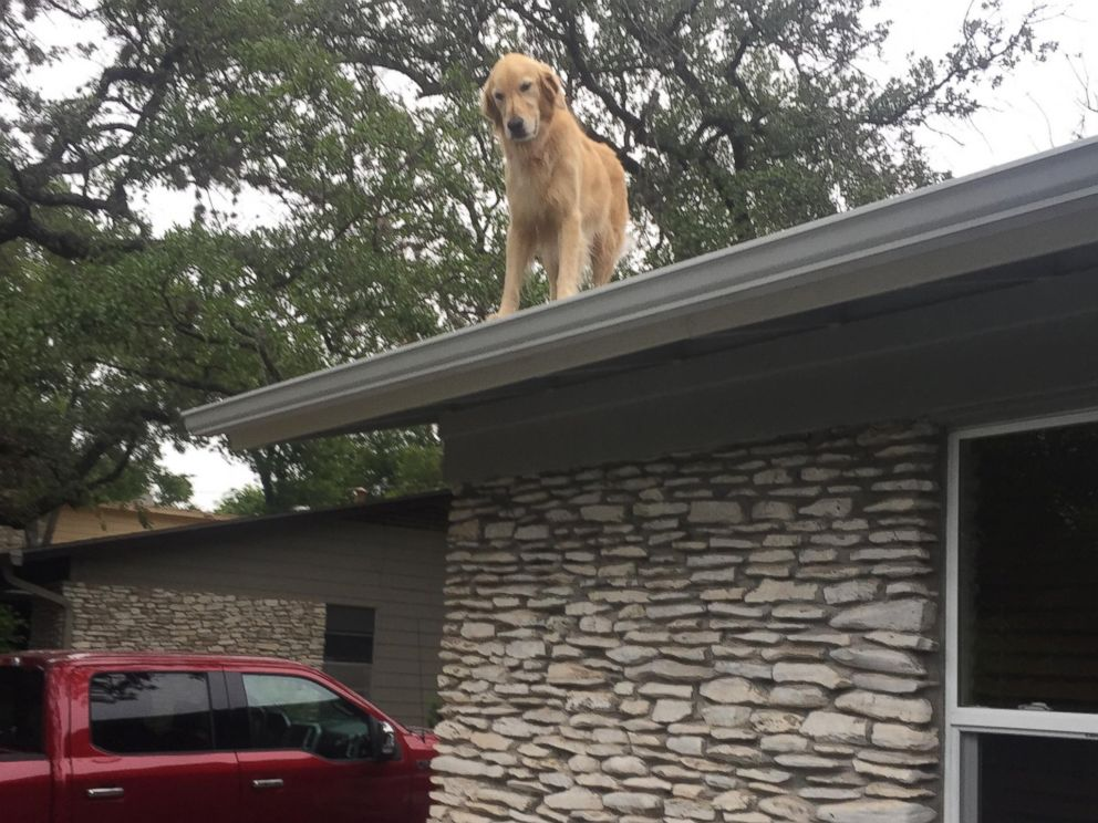 Dog Named Huckleberry Becomes Star For Hanging Out On