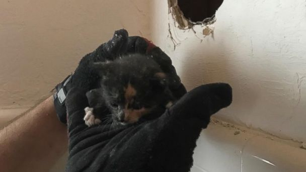 PHOTO: Fort Lauderdale Fire Rescue freed this kitten from a wall in a Florida resident's home.