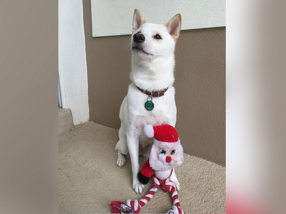 Dog Whose Favorite Toy is Santa Overjoyed to Meet the Real Thing
