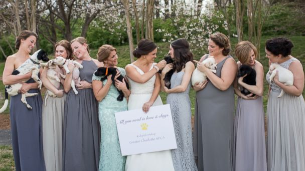 PHOTO: Bridesmaids trade bouquets for rescue puppies in Meghan Butler's North Carolina wedding photos.