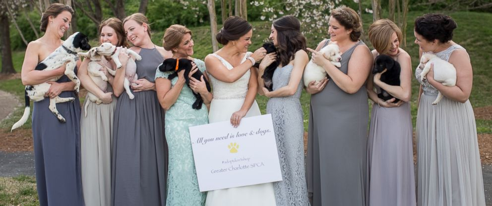 PHOTO: Bridesmaids trade bouquets for rescue puppies in Meghan Butlers North Carolina wedding photos.