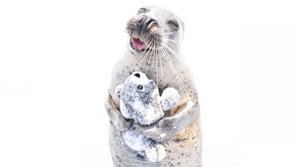 PHOTO: This seal in Japan is all smiles when cuddling up with its stuffed animal seal.