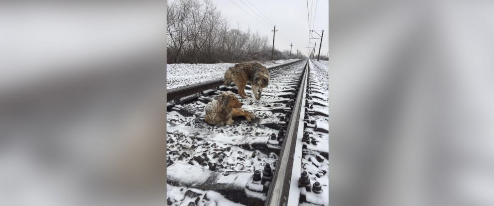 PHOTO: After a dog named Lucy was injured and stranded on train tracks, her furry friend, Panda, spent two days watching after her until they were rescued.