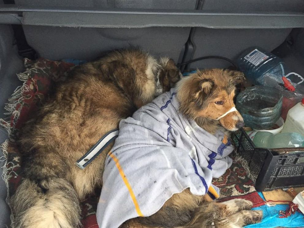 PHOTO: After a dog, named Lucy, was hit by a Ukranian moving train, her protective furry friend, named Panda, spent two days watching after her until they were rescued.