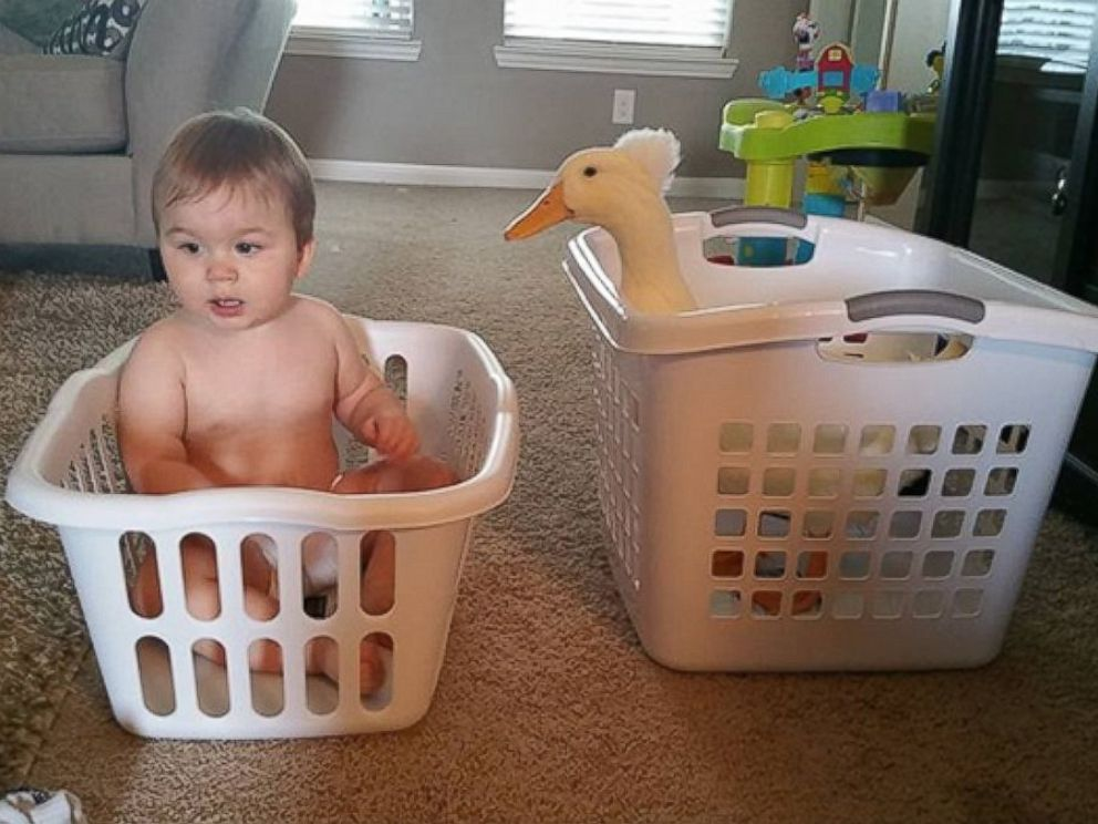 PHOTO: Toddler Tyler Young and his best friend, the familys pet duck known as Beaker.