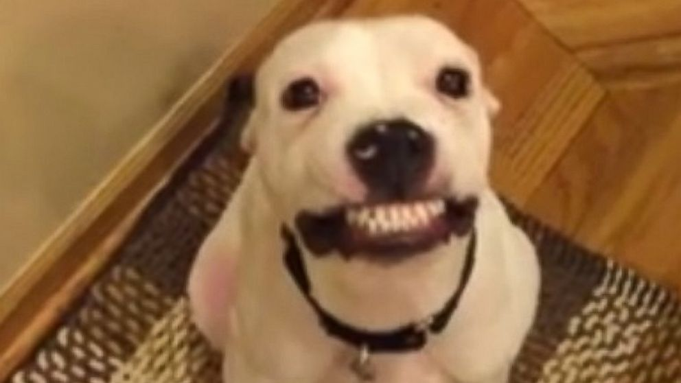 see charming chicago dog smile every time he hears say