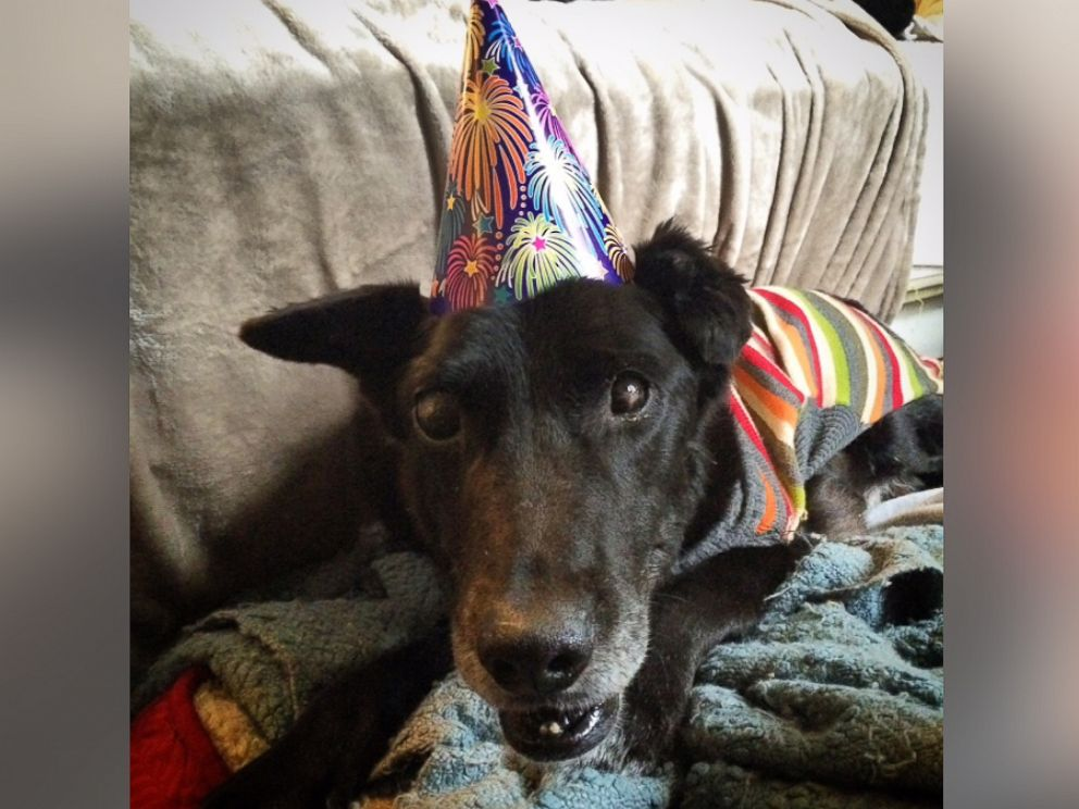 PHOTO: Blackie celebrates his first New Years inside a home.