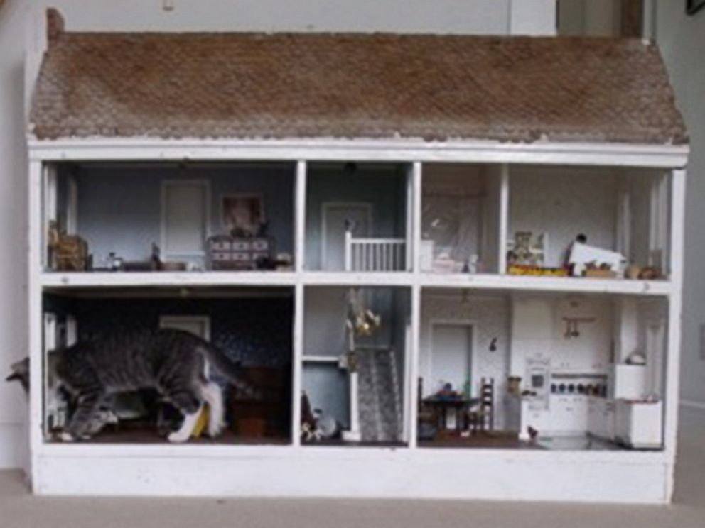 PHOTO: A giant-looking cat, pictured in this undated photo, is actually normal-sized and inside a dollhouse.