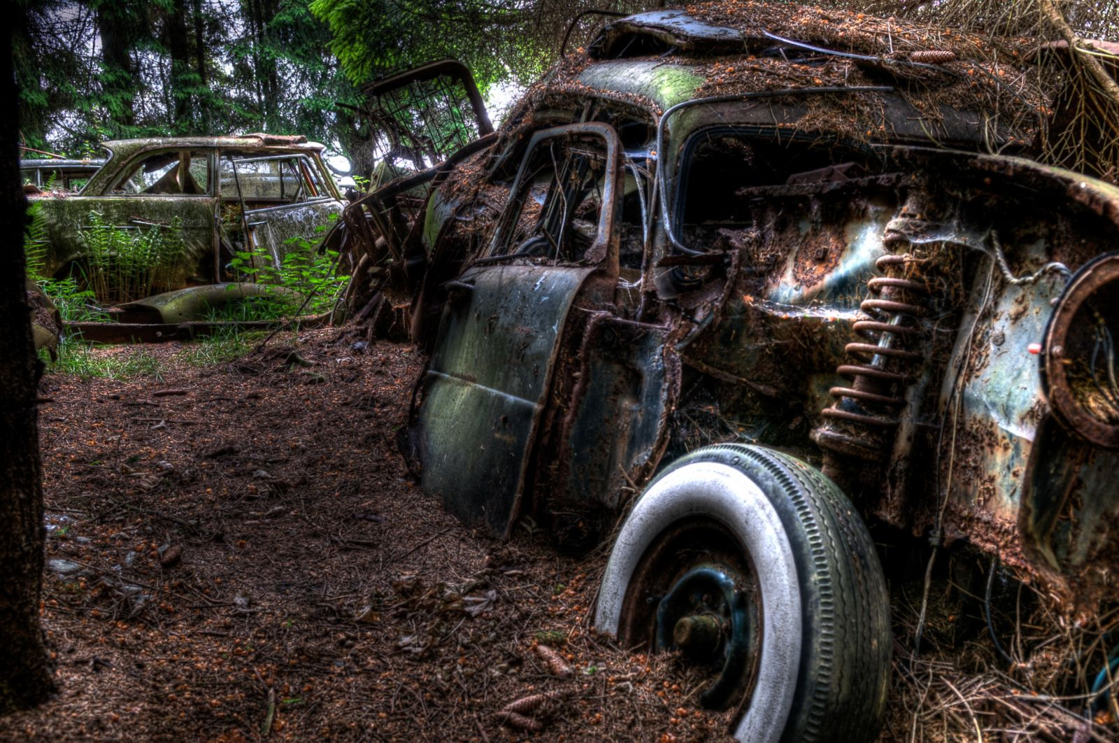 Forest Full of Abandoned Cars Photos - ABC News