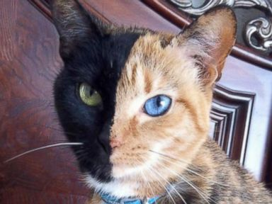 Two-Toned Cat Takes Internet By Storm