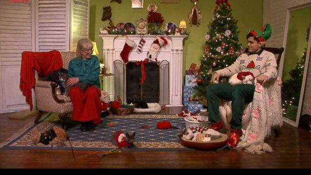 HT christmas cats tv EM 16x9 608 Christmas Cats TV: The Most Addictive Animal Adoption Tactic Ever