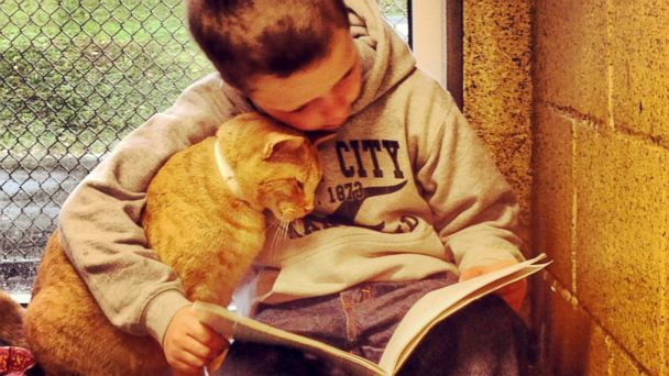 HT colby procyk jef 140317 16x9 608 Purr Fect Companions: Program Pairs Cats With Kids Learning to Read