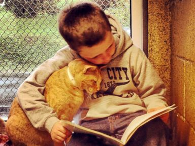 Purr-Fect Companions: Program Pairs Cats With Kids Learning to Read