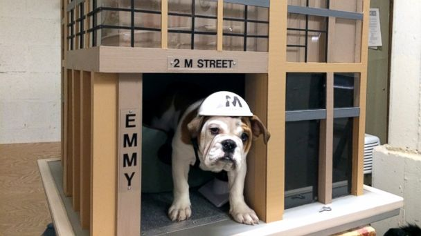 HT dog emmy 2m sk 140403 16x9 608 Apartment Building Barks Up Renters With Shared Bulldog Puppy