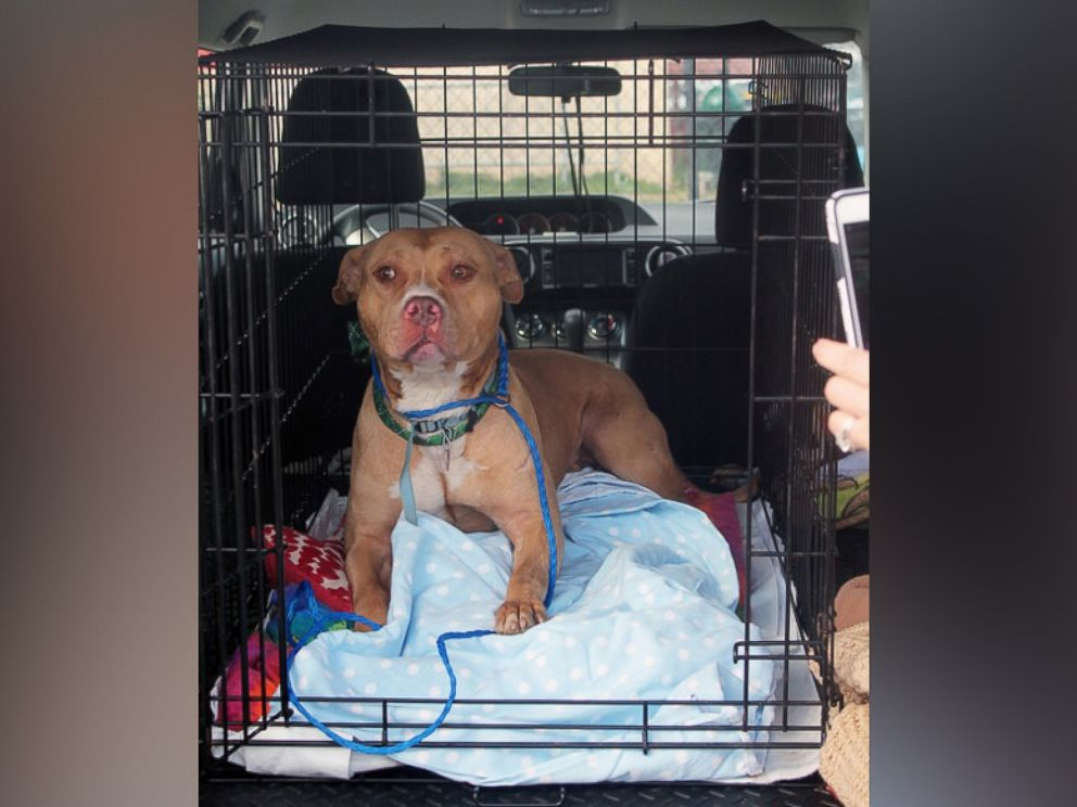 PHOTO: March was sent to a no-kill shelter on March 21, 2016, after his story was picked up by local news sites in Philadelphia.