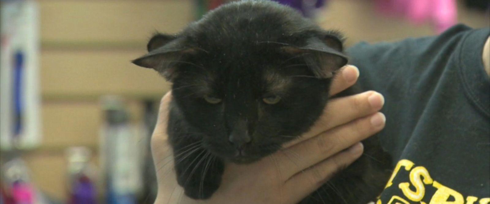 Forever  Cat Ears